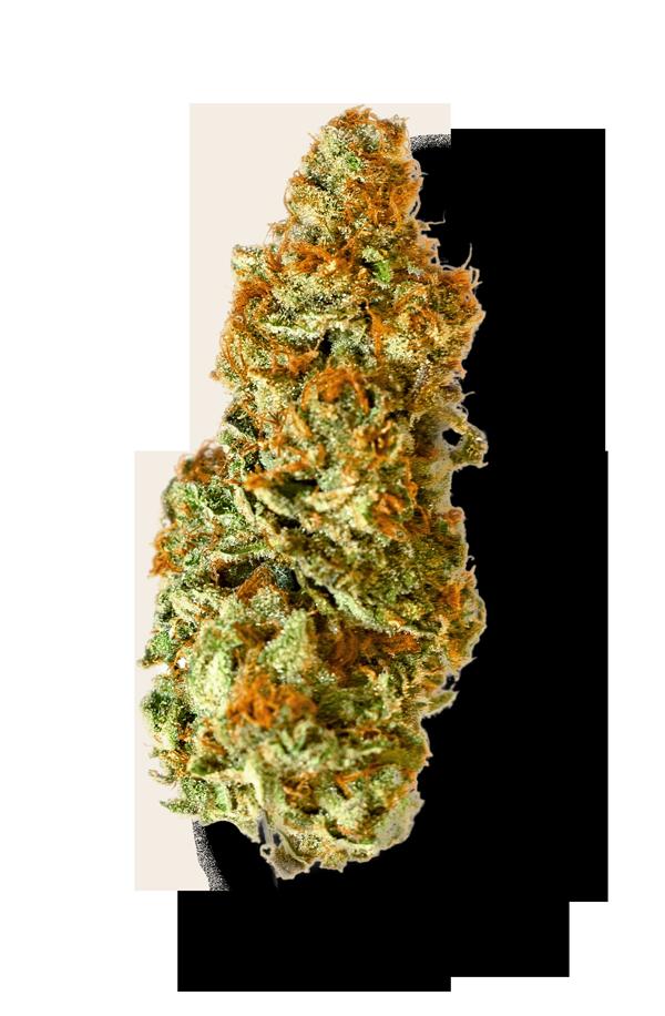 swade cannabis flower